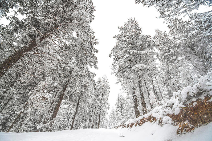 snow-covered-forest-winter